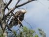 eagle_4_28_2013-005
