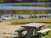 geese-at-town-beach